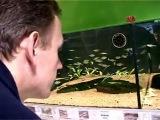 Запуск аквариума с Tetra